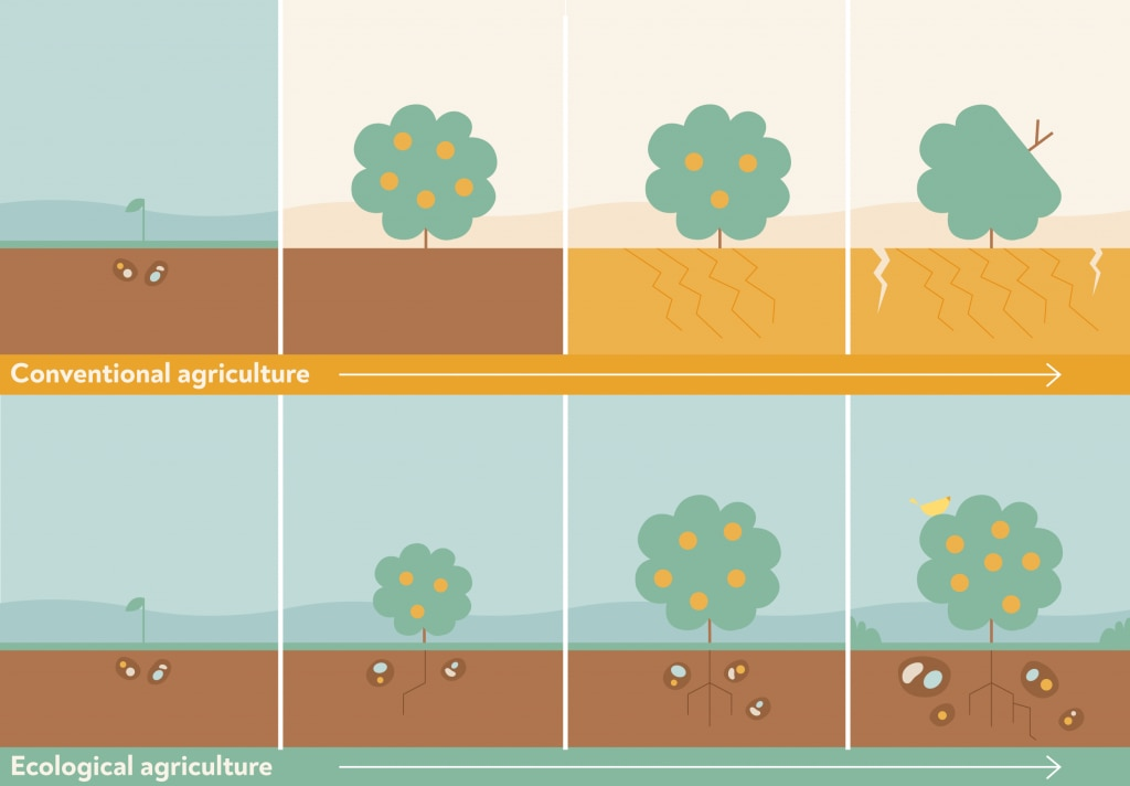 Conventional agriculture vs ecological agriculture